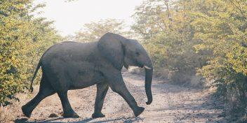 Wat olifantenpaadjes ons leren